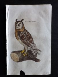 Brightly 1815 Antique Hand Col Bird Print. Bared Owl